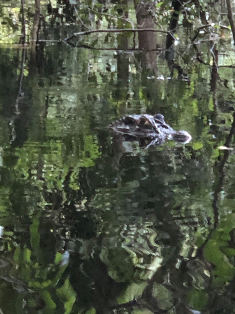 How about feeding giant alligator in Blackwaters
